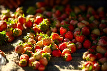 Strawberry Fruits Are Stacked Together On The Cloth, The Morning Sun Shines On The Brightly Colored Fruit And The Bokeh Background.