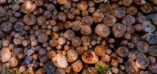 Tree trunks Fototapet