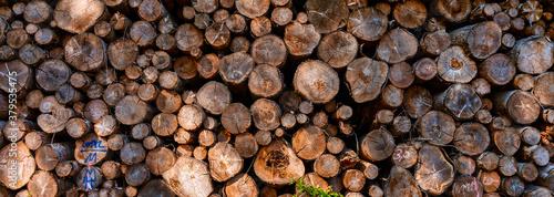 Fotografiet Tree trunks