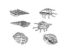 Doodle Shellfish Icons Isolate...