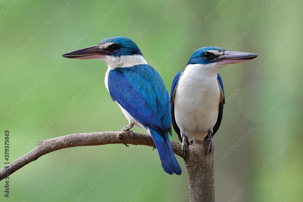exotic beautiful blue birds in sweet moment