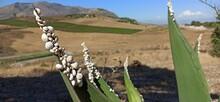 Snails On Aloe Leaves. Orizont...
