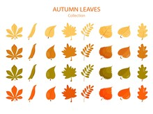 Big Collection Of Autumn Leave...