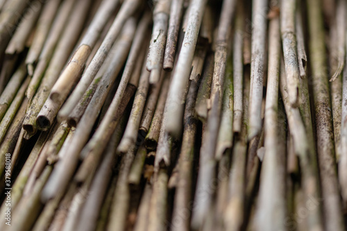 Papel de parede Closeup shot of bamboos