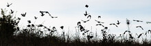 Bird Silhouettes Flying Away B...