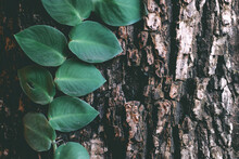 Natural Leaves Plant Growing O...