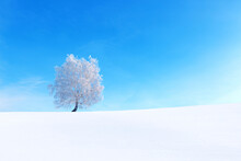 Frozen Trees And Branches . Be...