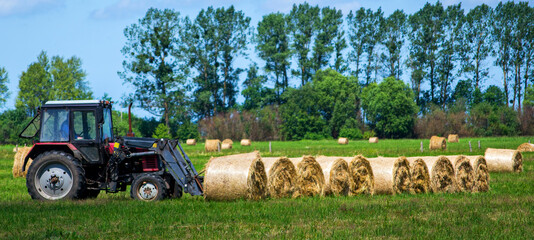 Red tractor carrying hay bale rolls - stacking them on pile. Agricultural machine collecting bales of hay on a field