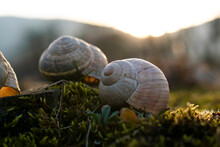 Snail House At Sunset!
