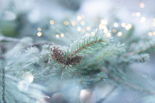 Fototapeta Rime covered fir branches in winter Rime covered green fir tree branches with festive bokeh. Close-up with short depth of field for a winter and christmas concept. obraz