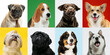 Good boy. Stylish adorable dogs posing. Cute doggies or pets happy. The different purebred puppies. Creative collage isolated on multicolored studio background. Front view. Different breeds.