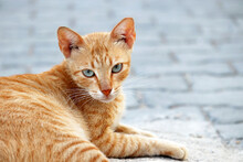 Ginger Cat Sitting On A City S...