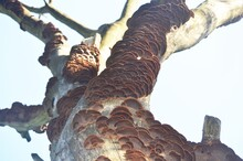 Fungus On Tree Branches