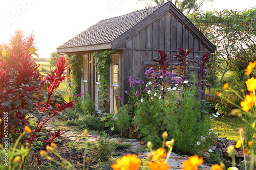 Little Rustic Cottage Like Garden Shed Surrounded By Colorful Summer Flowers Fototapeta