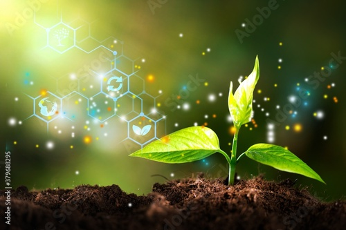 Growth of new life green plant in soil Canvas