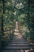 Autumn Walk Through The Decidu...