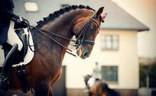 Equestrian Sport. Dressage Of ...