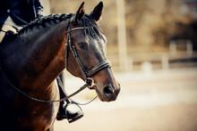 Equestrian Sport. Portrait Spo...