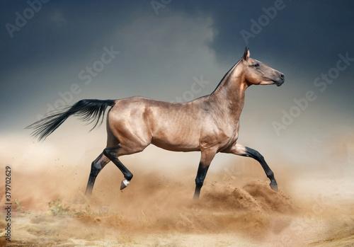Golden bucksking akhal-teke horse running in desert Wallpaper Mural