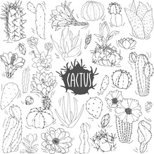 A Set Of Cacti In Black And White. Cactus Sketch. Vector Set Of Cacti, Aloe And Leaves. Collection Of Exotic Plants. Decorative Natural Elements Isolated On White. Cactus With Flowers.