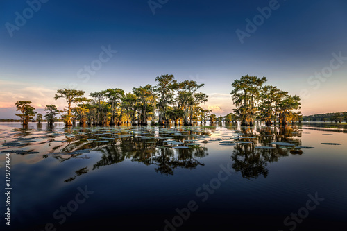 Fototapeta Early eveing with cypress trees in the swamp of the Caddo Lake State Park, Texas