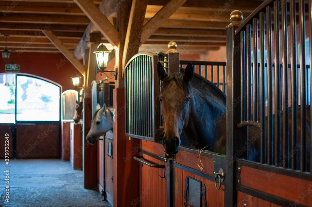Fototapeta konie