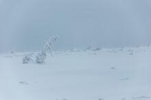 Śnieżyca, Widok Jak Z Innej ...