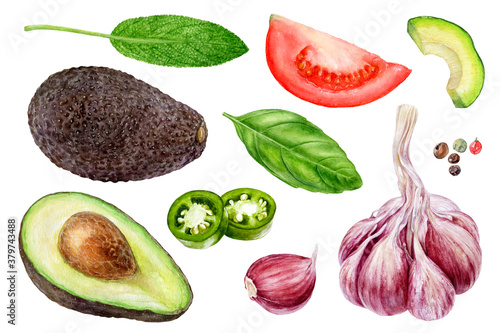Garlic avocado tomato basil sage jalapeno peppercorns set watercolor painting is Canvas Print