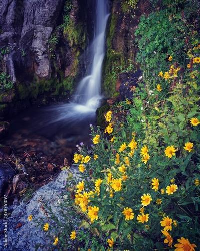 Upper Stewart falls in utah with yellow wildflowers.