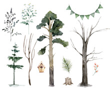 Scandinavian Watercolor Natural Set Of Green Trees, Birch And Pine, Mountain Ash, Forest. Winter Vintage Collection Isolated On White Background. Woodland Set