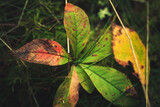 Autumn nature. Colorful leaves over dark green