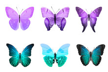Six Color Butterflies Isolated On A White Background