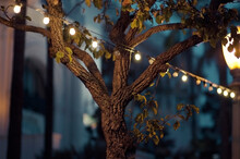 A Tree In The Park At Twilight With Lights And Lamp