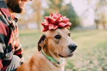 A Dog With A Christmas Bow On Its Head
