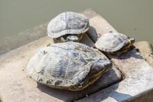 Florid Tortoise Turtle