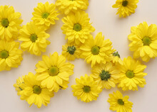 Yellow Camomile, Flower Backgr...