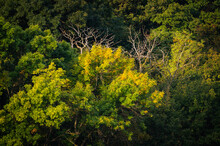 Autumn Forest With Yellow Green Colors