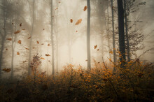 Leaves Falling In Forest, Autu...