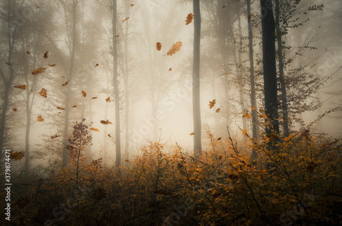 leaves falling in forest, autumn forest landscape