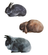 Cute Rabbits On The White Back...