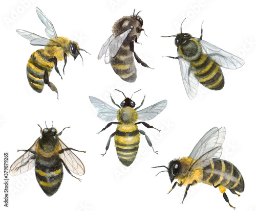 Photo Watercolor set of bees