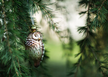 Old-fashioned Glass Owl Ornament Hangs From Spruce Branch In Garden