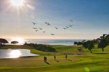 Sandpiper  Golf Course At Suns...