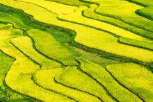 Beautiful Step Of Rice Terrace...