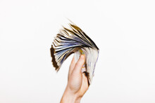 Hand Holding Money . Sterling Cash Brexit Concept