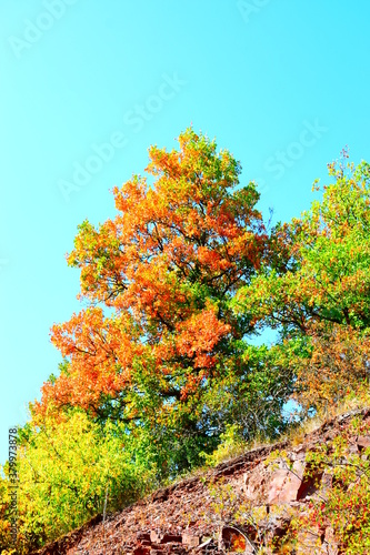 Fototapeta Herbststimmung auf engen Serpentinen zwischen Valwig und Valwiger Berg