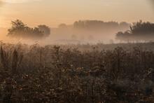 Autumn Morning In Sweden Skåne