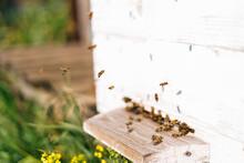 Close-up Swarm Of Honey Bees C...