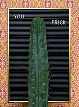 Phallic Cactus With Matching Text On Vintage Letter Board