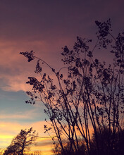 Silhouette Of A Crape Myrtle In Winter Against A Colorful Sunset Sky